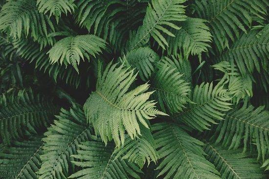 Springfield Lakes, Australië: Leaves