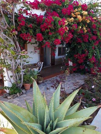 Torre la Sal, Spain: terrasse en fleurs
