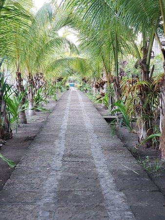 Monty's Beach Lodge: Row of palms