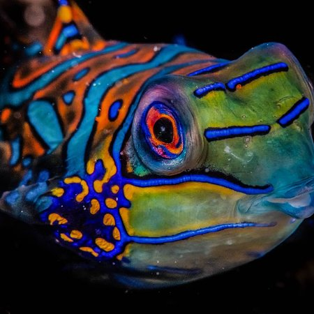 Karang Divers Amertha