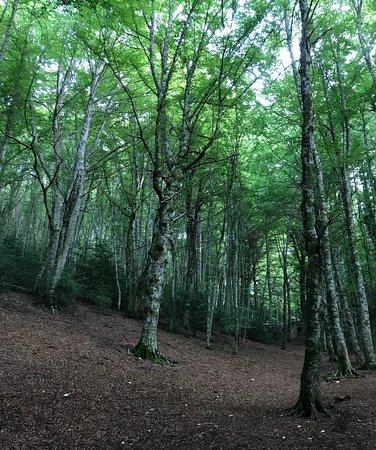 Gargano Peninsula, Italie : Foresta Umbra