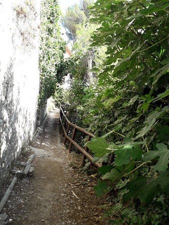 Le Sentier Du Lézard Photo