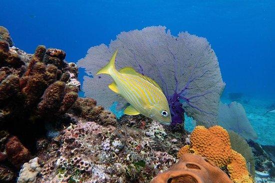 Jungle Divers