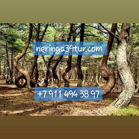 Neringa 39 tur