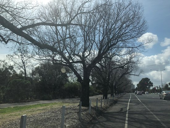 Coulson Reserve