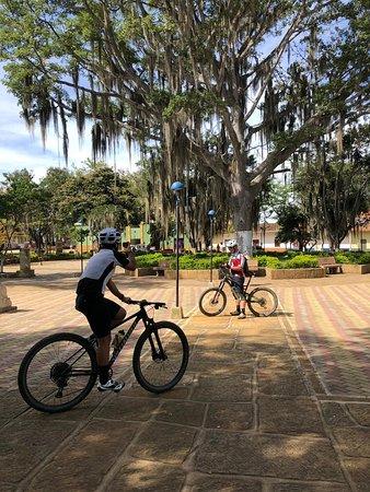 Una de las razones para visitar Villanueva es el gigante árbol que esta en su parque principal.