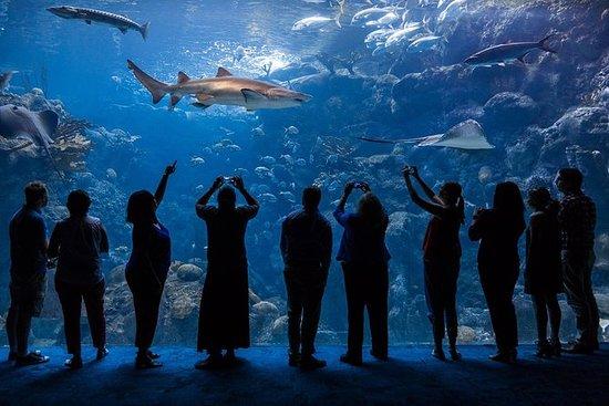 Il Florida Aquarium a Tampa Bay