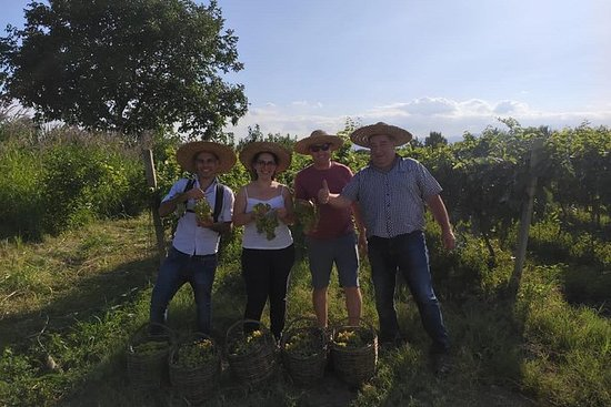 Tour de cosecha de uva en la región...