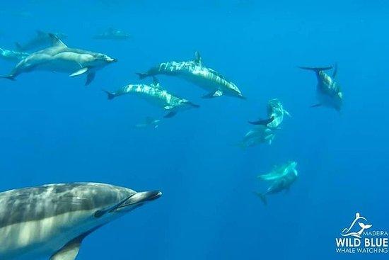 Observation des baleines et des...