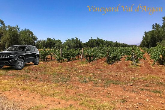 Private Day Trip to Vineyard Val d'Argan included Winetasting Lunch, per person: Private Day Trip Marrakech - Vineyard Val d'Argan, per person