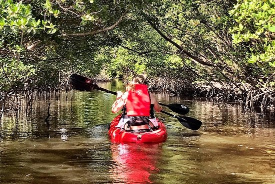 Mangrove Tunnel Kayak Eco Tour