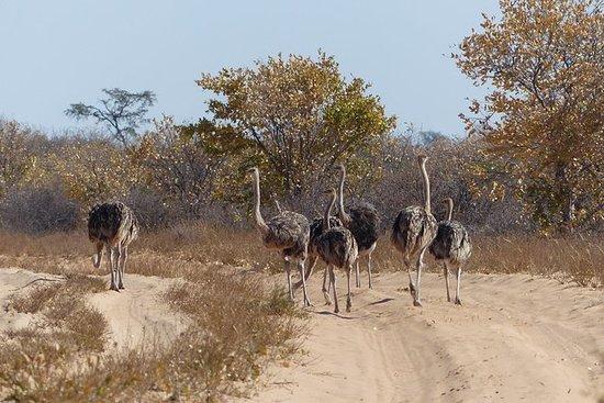 莫雷米(Okavango)一日游
