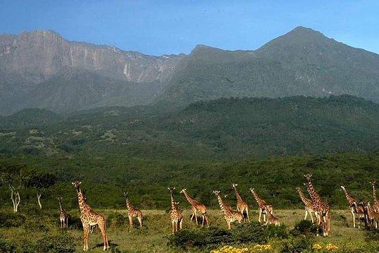 タンザニアサファリマウントメル日帰りハイキング