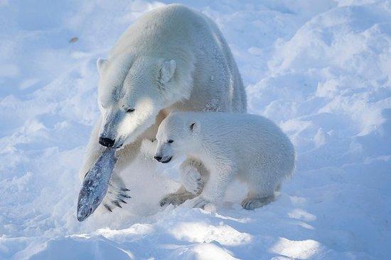 拉努阿野生动物公园日:参观北极动物!