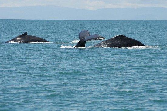 En dag hvalsafari fra San Jose