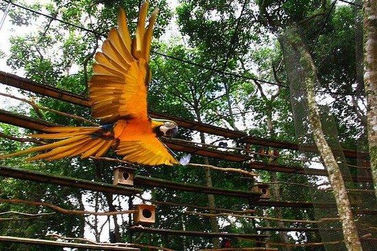 Itaipu Dam & Bird Park & Iguassu...