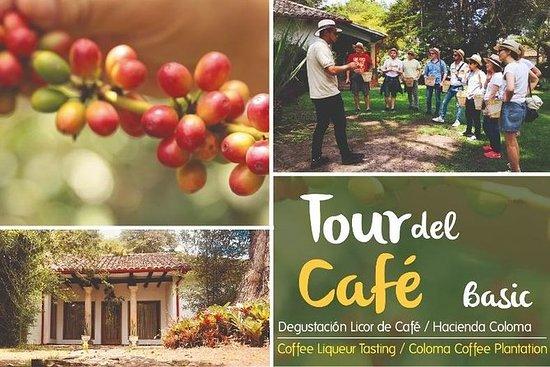 Coloma咖啡种植园的实践之旅 - 基本旅游选择