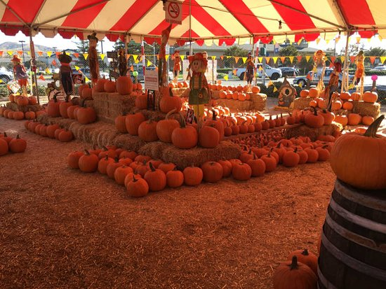 Arizona Pumpkin Patch