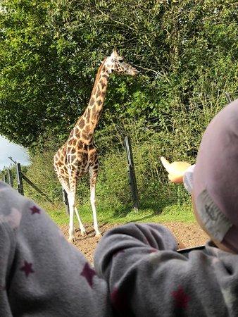 zoologiske museum københavn åbningstider biograf aarhus
