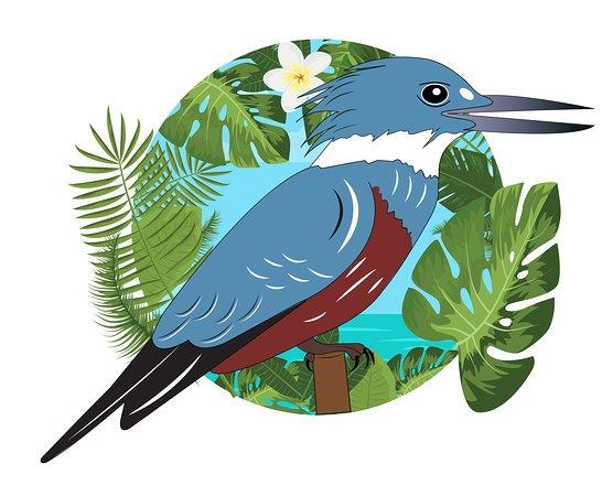 Tropical Kingfisher Tours