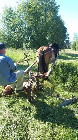 Gammelstad, Suecia: Slåtter med häst Fotograf Therese Wasserman