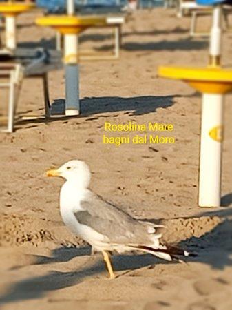 Villadose, Italien: Spiaggia di Rosolina Mare