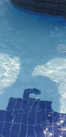 Pool - Eftalia Ocean Photo