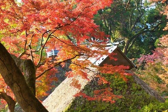 Daikozenji Temple