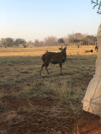 Overnight on route to Botswana
