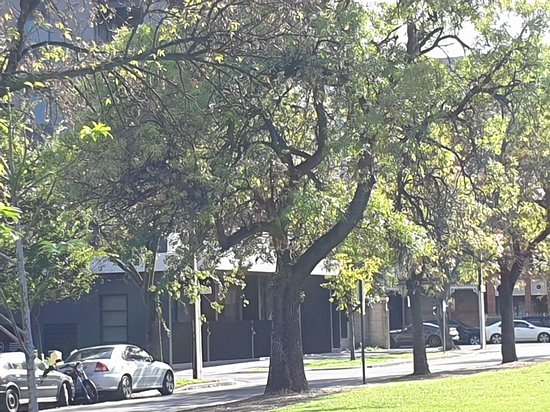 Hurtle Square, Adelaide
