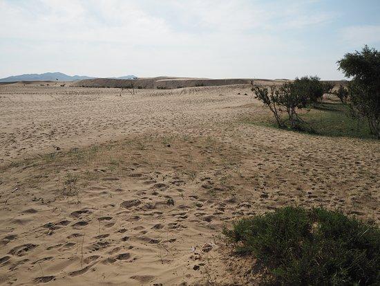 Bulgan Province, Mongolia: Bushes let sand dunes look more like sand dunes.