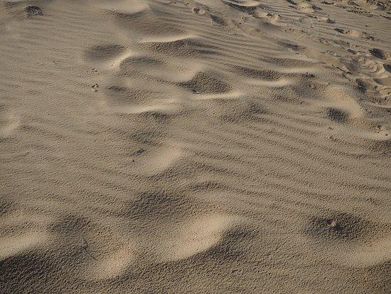 Bulgan Province, Mongolia: We even found ripple marks on a sand dune.