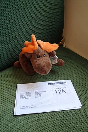 Moosie & his ticket. Check out his name on it!
