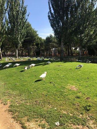 Un agradable paseo por el Parque Alces de Alcázar