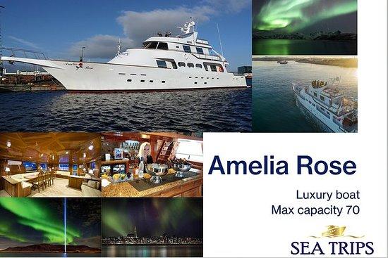 Aurora boreale a bordo di uno yacht