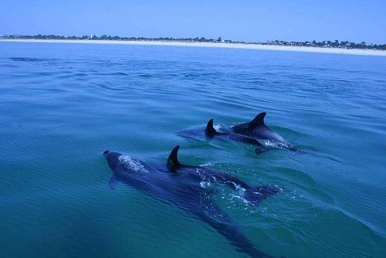 Observação de golfinhos em Setúbal, a...