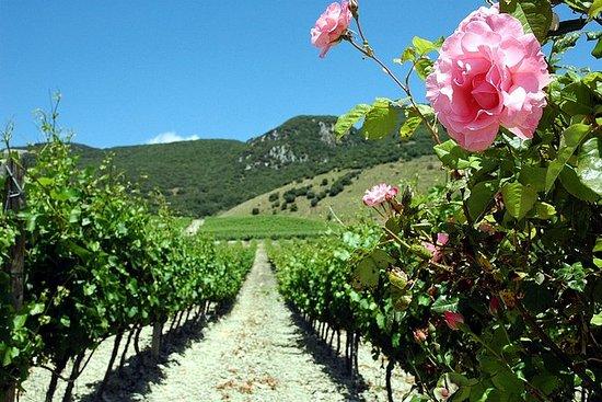 Visita a viñedos y bodegas...