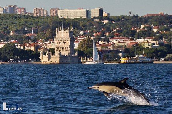 Lisbon Dolphins