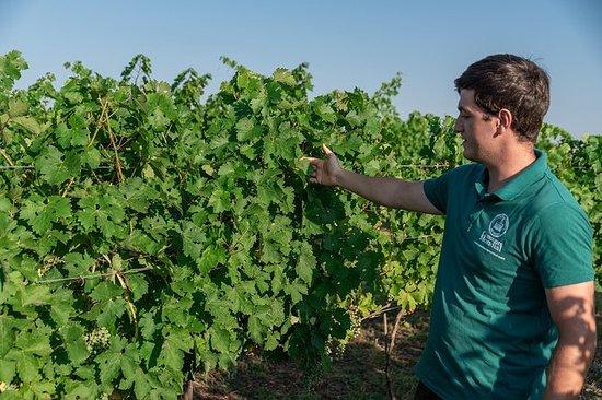 Wijngaarden tour & wijnproeverij in ...