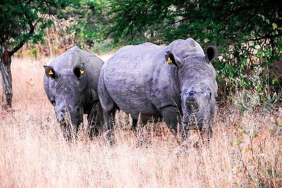 马托波斯国家公园犀牛徒步旅行社
