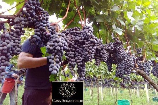 Rondleiding met wijnproeverij in Casa ...