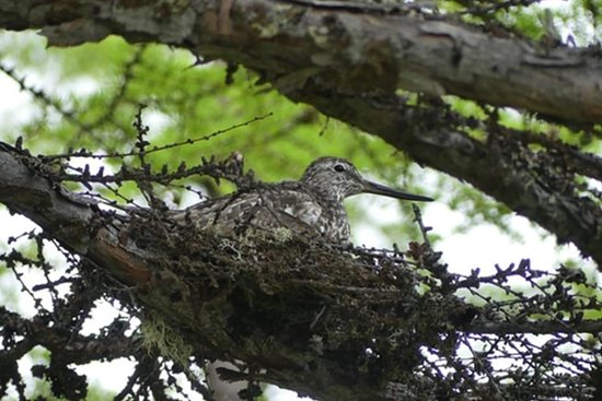 Ảnh về Rutas Ornitológicas de Catalunya - Ảnh về Sant Feliu de Codines - Tripadvisor