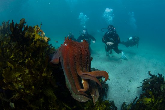 Dive Centre Manly