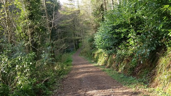 Muff Glen outside Eglinton, Co Derry is a beautiful place to go for walks