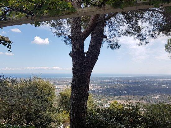 Selva di Fasano Foto