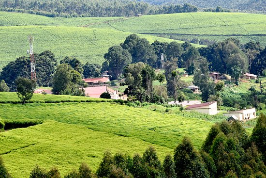 Bururi Province, Burundi: Simple Choices For Sustainable Tourism: The blend of a beautiful people and diverse well-kept culture with the seductive beauty of the tropical environment, well-laid savannahs and lush green hills, the unmatched rich wildlife and the breezy coastal and inland beaches brings a unique fusion of experiences.