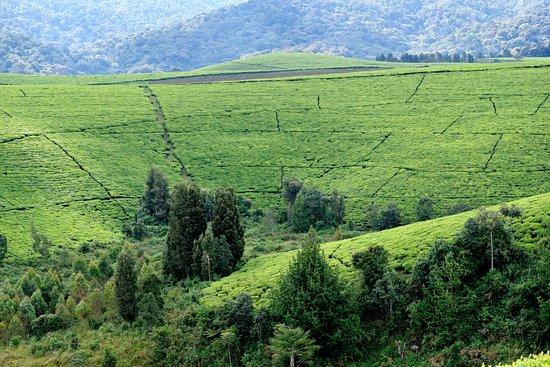 Bururi Province照片