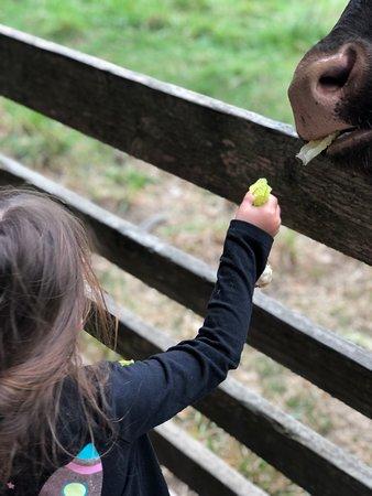 Little Farm in Tilden Park - Awesome for Preschoolers