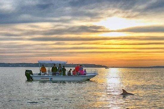 Crociera al tramonto con delfini e