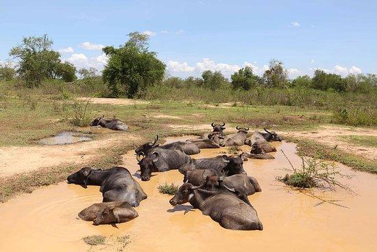 Sri Lanka Wildlife Tour